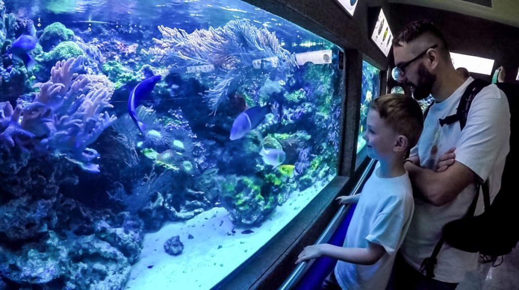 akwarium gdynia z dzieckiem